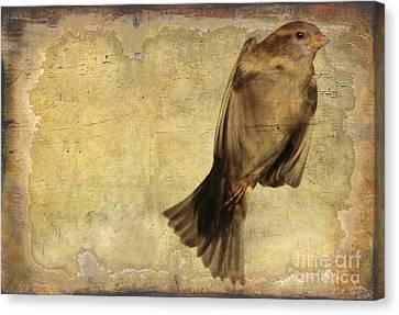 Birdness 2 Canvas Print by Jim Wright