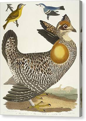 Birds  Canvas Print by Alexander Wilson
