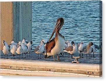 Birds - Among Friends Canvas Print