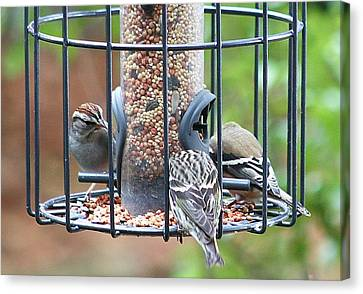 Birds At Lunch Canvas Print by Ellen O'Reilly