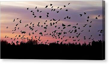 Canvas Print featuring the photograph Birds At Sunrise by Aimee L Maher Photography and Art Visit ALMGallerydotcom