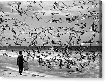 Birds Birds Canvas Print