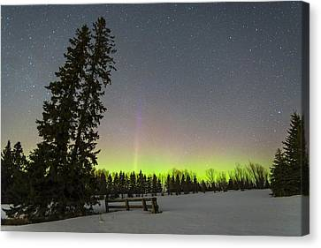 Bird's Hill Aurora One Canvas Print