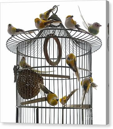 Birdcage Canvas Print - Birds Inside And Outside A Cage by Bernard Jaubert