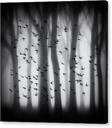Haze Canvas Print - Birds by Jacqueline Van Bijnen