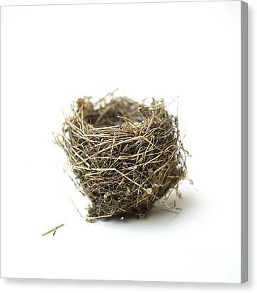Bird's Nest Canvas Print by Bernard Jaubert