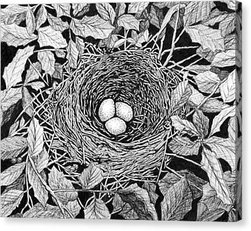 Bird's Nest Canvas Print by Janet King
