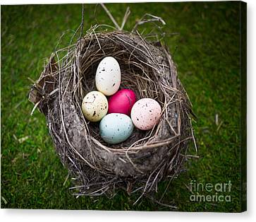 Bird's Nest With Easter Eggs Canvas Print by Edward Fielding