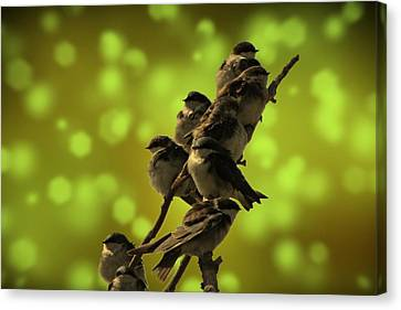 Canvas Print featuring the photograph Birds Of A Feather by David Dehner