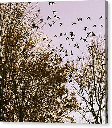 Birds Of A Feather Flock Together Canvas Print by Thomasina Durkay