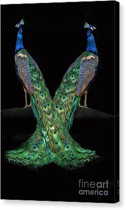 Peacocks Canvas Print - Birds Of A Feather by Stephanie Laird