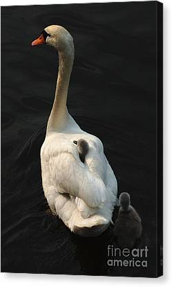 Birds Of A Feather Stick Together Canvas Print by Bob Christopher