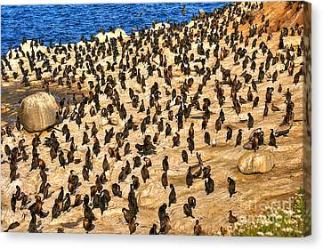 Canvas Print featuring the photograph Birds Of A Feather Stick Together by Jim Carrell