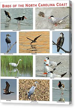 Birds Of North Carolina Coast Canvas Print by Dana Sohr