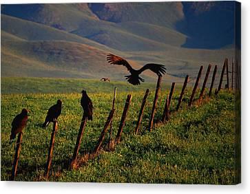 Birds On A Fence Canvas Print by Matt Harang