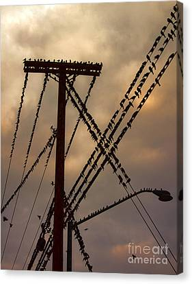 Birds On A Wire Canvas Print by Gregory Dyer