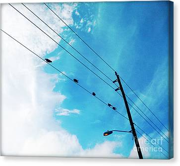 Birds On A Wire IIi Canvas Print by Chris Andruskiewicz