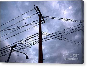Birds On A Wire In Blue Canvas Print by Gregory Dyer