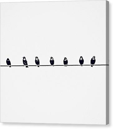 Birds On A Wire Canvas Print by Jessie Gould