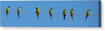 Birds On A Wire Canvas Print by Julie Cameron