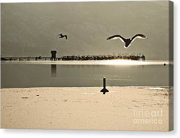 Birds On Thine Ice Canvas Print by Brian Arnold