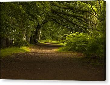 Birnam Woods Landscape Wall Art Canvas Print