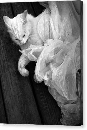 Birth Of The White Cat Canvas Print by Darryl  Kravitz