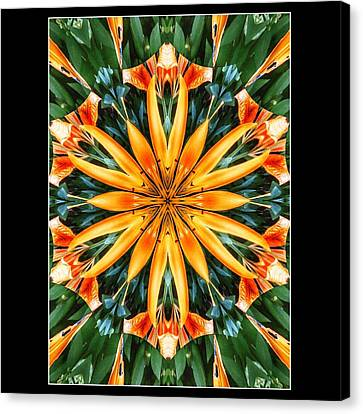 Birthday Lily For Erin Canvas Print by Nick Heap