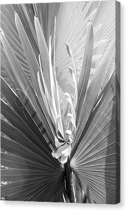 Canvas Print featuring the photograph Bismark Palm by Jim Snyder