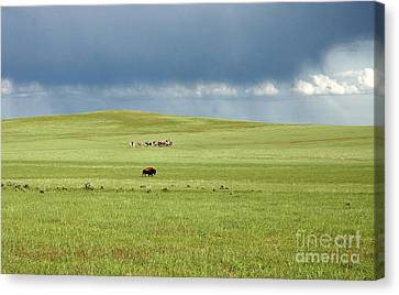 1009a Bison And Riders Canvas Print by NightVisions