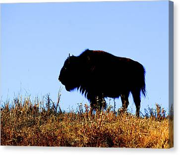 Bison Bull In Silhouette In Lamar Canvas Print by Richard Wright