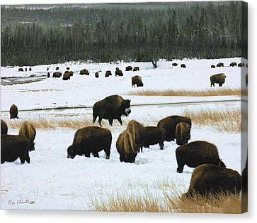 Bison Cows Browsing Canvas Print by Kae Cheatham