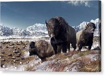Bison Herd In Winter Canvas Print by Daniel Eskridge