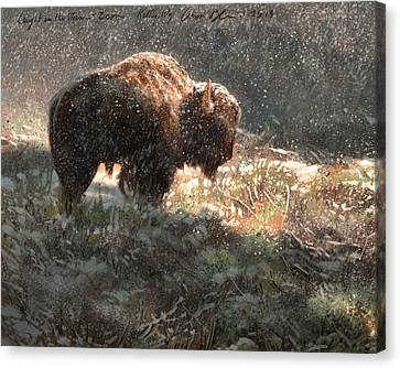 Bison In The Snow Canvas Print by Aaron Blaise