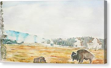 Bison In Yellowstone Canvas Print by Geeta Biswas