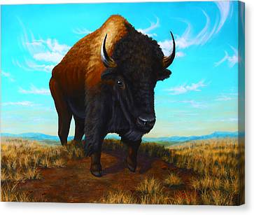 Bison On The Knoll Canvas Print by Clay Hibbard