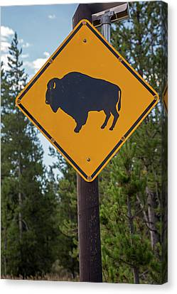 Bison Sign Canvas Print by Jim West