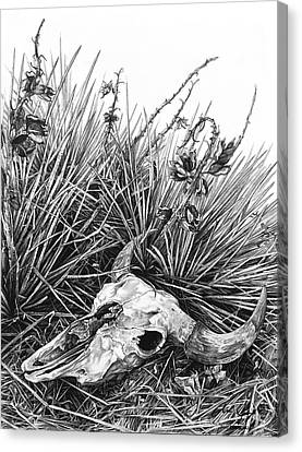 Canvas Print featuring the painting Bison Skull by Aaron Spong