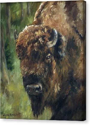Bison Study - Zero Three Canvas Print by Lori Brackett