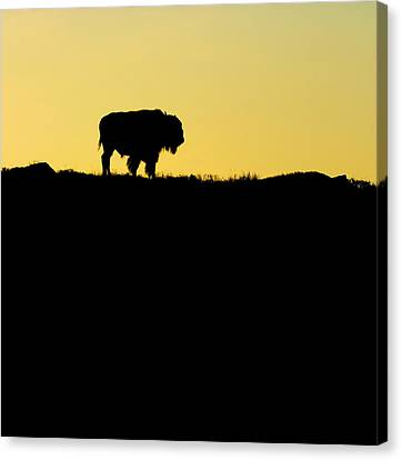 Canvas Print featuring the photograph Bison Sunrise by Sonya Lang