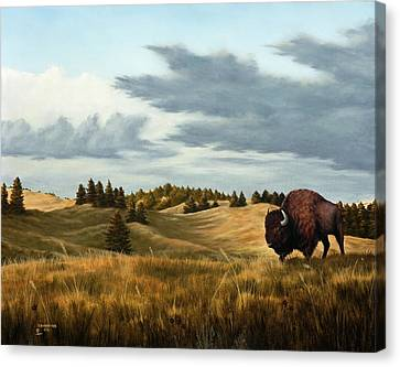 Bison  Wind Cave Park  South Dakota Canvas Print by Rick Bainbridge