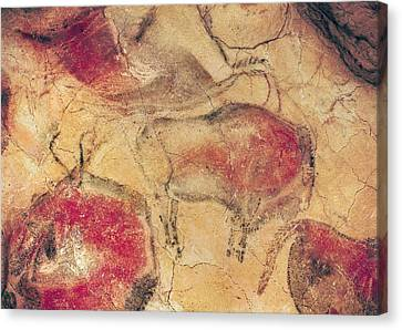 Bisons, From The Caves At Altamira, C.15000 Bc Cave Painting Canvas Print by Prehistoric
