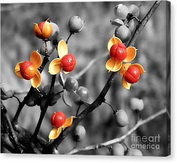 Bittersweet Berries Canvas Print