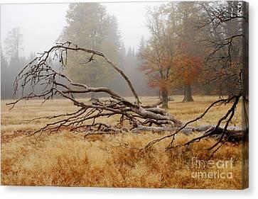 Bizarre Rootage In The Highmoor Canvas Print by Karin Stein