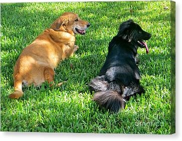 Canvas Print featuring the photograph Black And Tan by Joy Hardee