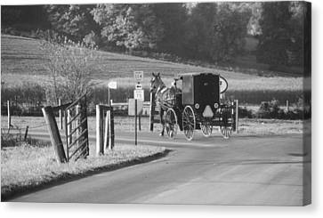 Black And White Amish Horse And Buggy Canvas Print by Dan Sproul