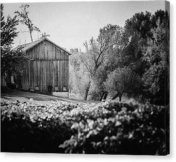 Black And White Barn Landscape - In The Vineyard Canvas Print
