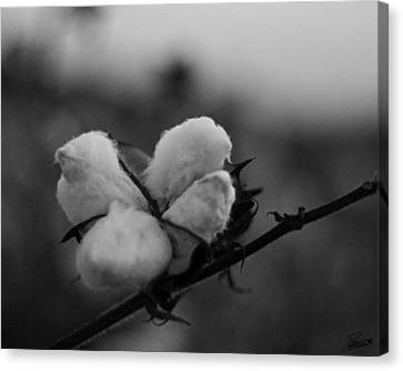 Black And White Boll Canvas Print