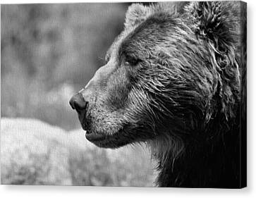 Black And White Brown Bear Canvas Print by Dan Sproul