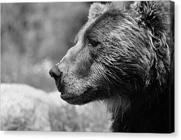Black And White Brown Bear Canvas Print